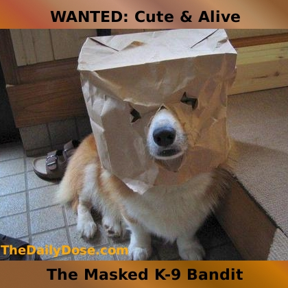 WANTED: Cute and Alive. The  Msaked K-9 Bandit. TheDailyDose.com .