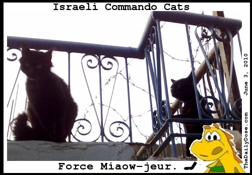 Israeli Commando  Cats. Force Miaow-jeur. TheDailyDose.com .