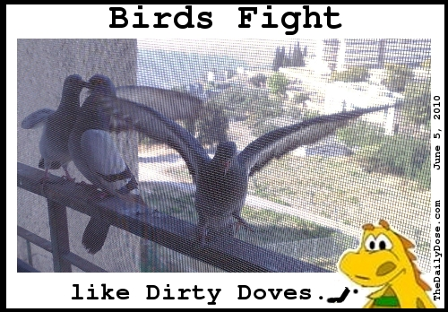 Birds Fight Like Dirthy  Doves. TheDailyDose.com .