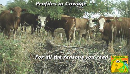 050204profiles-in-cowage
