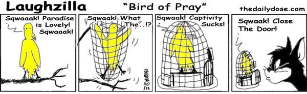 110805bird-of-pray
