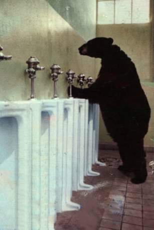 bearinal