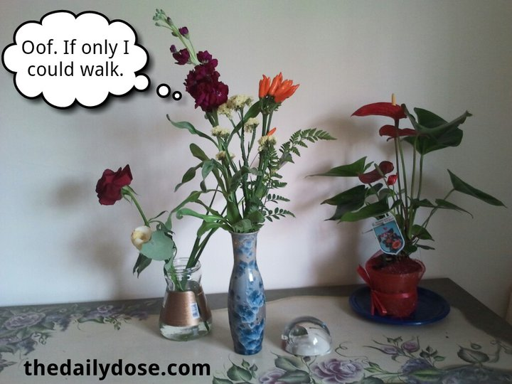 flower-talk-off-if-only-i-could-walk